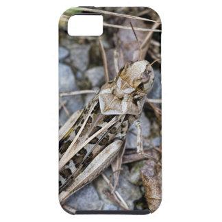 Étuis iPhone 5 Sauterelle camouflée