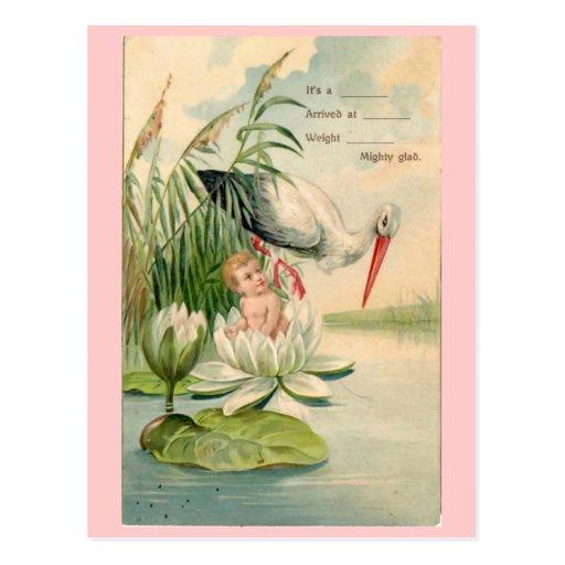 faire part cigogne vintage de naissance protectio cartes postales zazzle. Black Bedroom Furniture Sets. Home Design Ideas