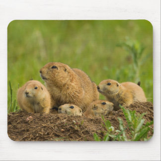 Famille de chien de prairie sur le repaire tapis de souris