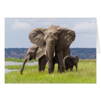 Famille d'éléphant africain, Botswana, carte de