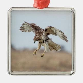 Faucon coupé la queue par rouge non mûr planant ornement carré argenté