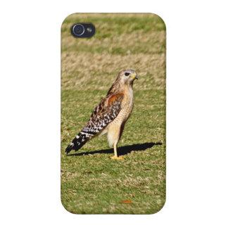 Faucon épaulé rouge sur le terrain de golf étuis iPhone 4