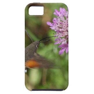 Faucon-mite de colibri (stellatarum de coque iPhone 5 Case-Mate