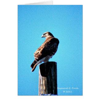 Faucon rouge - carte et enveloppe