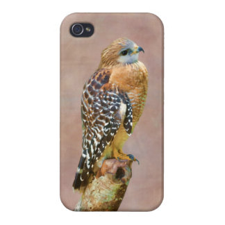 Faucon Rouge-Épaulé iPhone 4 Case