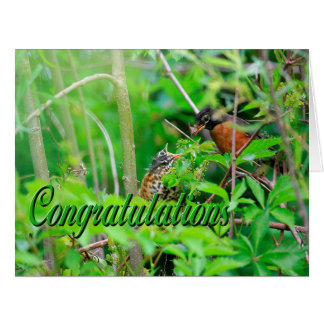 Félicitations de Robin de ressort