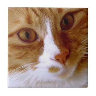Fermez-vous vers le haut de la tuile de chat carreaux