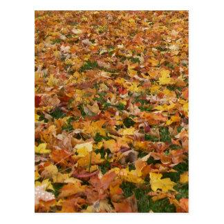 Feuille d'automne carte postale