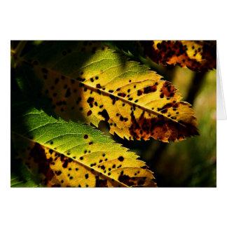 Feuille d'automne changeant des cartes pour notes
