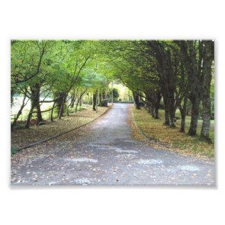 Feuille d'automne et avenue rayée par arbre impression photo