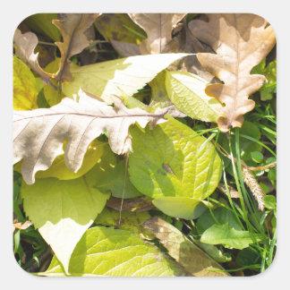 Feuille d'automne tombé sur la pelouse d'herbe sticker carré