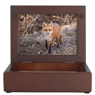 Fin de Fox rouge et personnel Boîte À Souvenirs