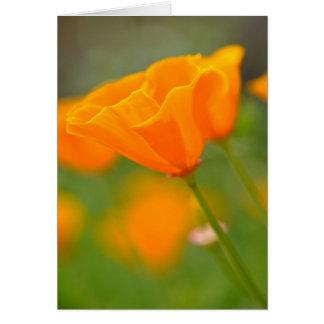 Fin orange de pavot de joyeux anniversaire d'août carte