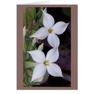 Fleur blanche de fleur de Kalanchoe sur la carte