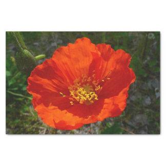 Fleur colorée de pavot rouge d'Alaska Papier Mousseline