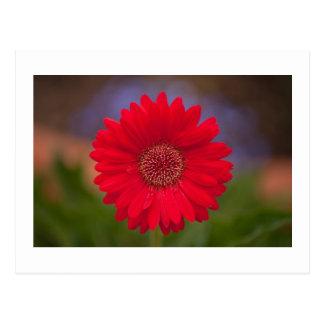 Fleur de centre commercial carte postale