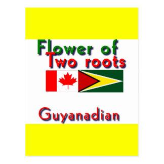 Fleur de deux racines guyanais-canadiennes carte postale