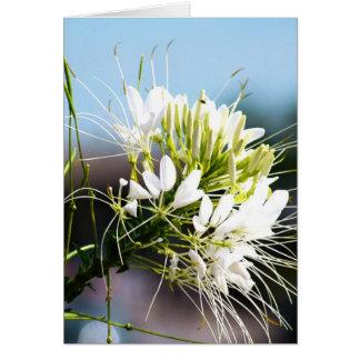 Fleur de lis blanc carte de vœux