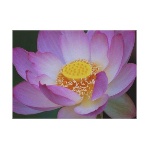 fleur de lotus et sa signification toile tendue zazzle. Black Bedroom Furniture Sets. Home Design Ideas