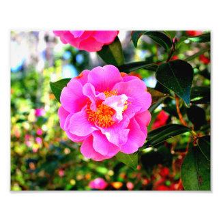 Fleur de ressort impression photographique