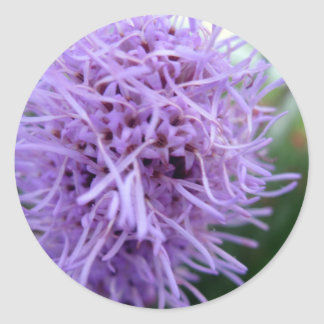 Fleur de violette d'araignée de tentacule sticker rond