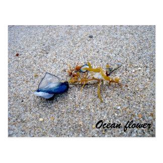 Fleur d'océan carte postale