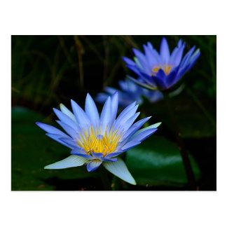 Fleur et signification de Lotus Carte Postale