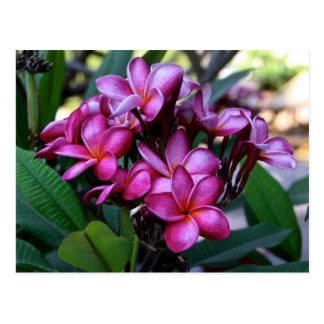 Fleur exotique, carte postale