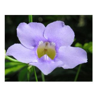 Fleur exotique carte postale