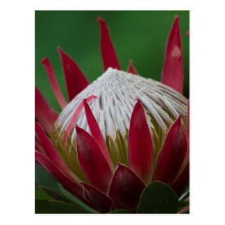 fleur exotique cartes postales