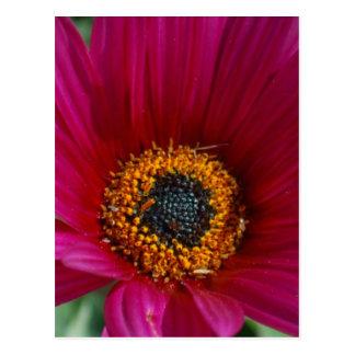 Fleur magenta carte postale