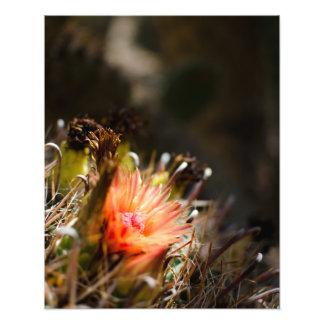 Fleur orange de cactus photographe