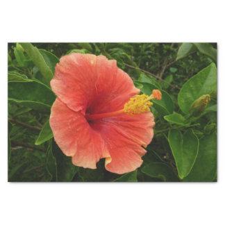 Fleur orange de ketmie papier mousseline