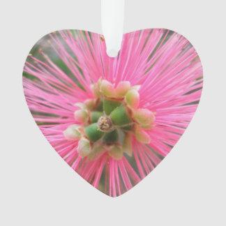 Fleur rose d'arbre de gomme