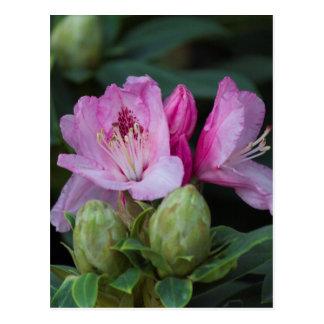 fleur tropicale cartes postales