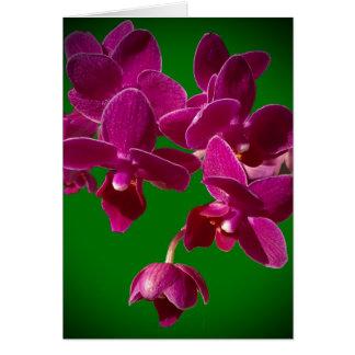 Fleur vibrante d'orchidée sur la carte de voeux