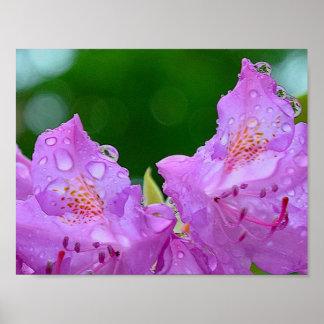 Fleur violette poster