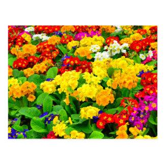 Fleurs blanches rouges, jaunes, pourpres colorées cartes postales