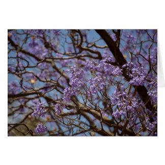 Fleurs bleues d'un arbre de Jacaranda Carte