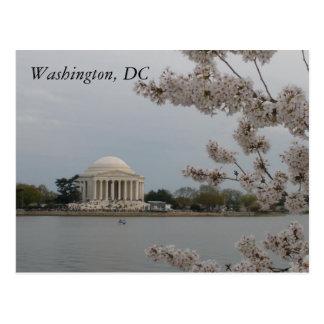 Fleurs de cerisier : Washington, D.C. Postcard Carte Postale