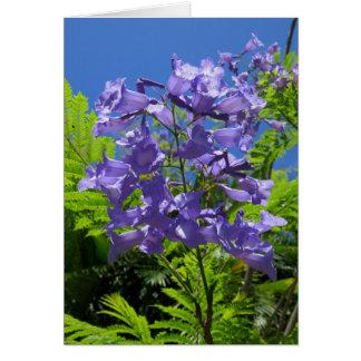 Fleurs de Jacaranda Carte