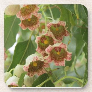 Fleurs de l'arbousier oriental sous-bock