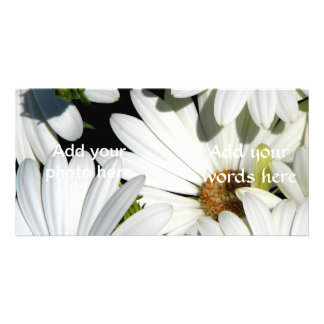Fleurs de marguerite blanche carte