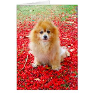 Fleurs de rouge de la carte | Pomeranian