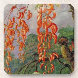 Fleurs d'un arbre de corail et d'un roi du sous-bock