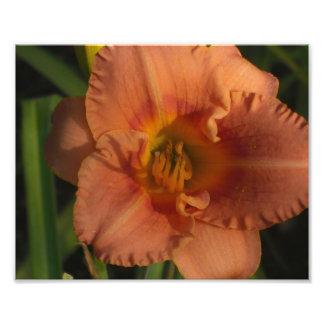 Fleurs Impression Photo