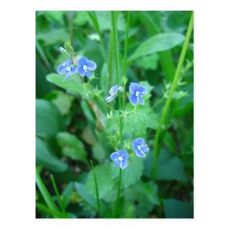 Fleurs sauvages bleus minuscules carte postale