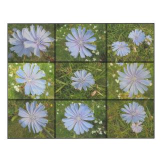 Fleurs sauvages dans le bleu