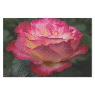 Floraison de rose de rose papier mousseline