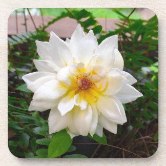 flower17 sous-bocks